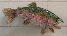 Rainbow Trout, Thomas Deininger, 2013, found objects on taxidermy bass, 10 x 24 x 19 in/ 25 x 61 x 48 cm